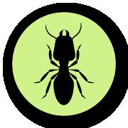 Termites - Quick Kill Pest Control